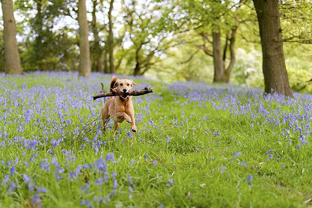 Dog Running Through Field with Flowers