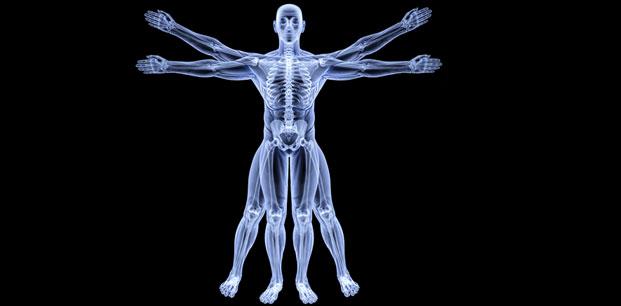 Skeleton Transparent