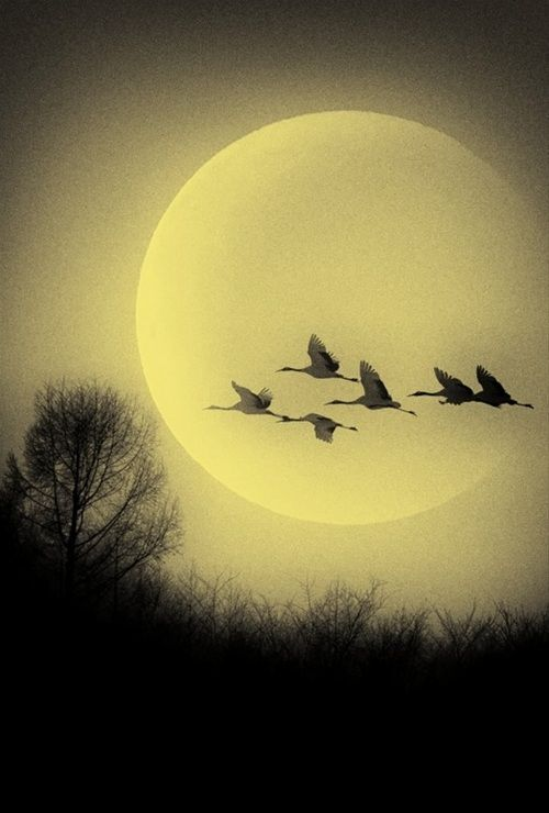 Geese moon trees at sunset