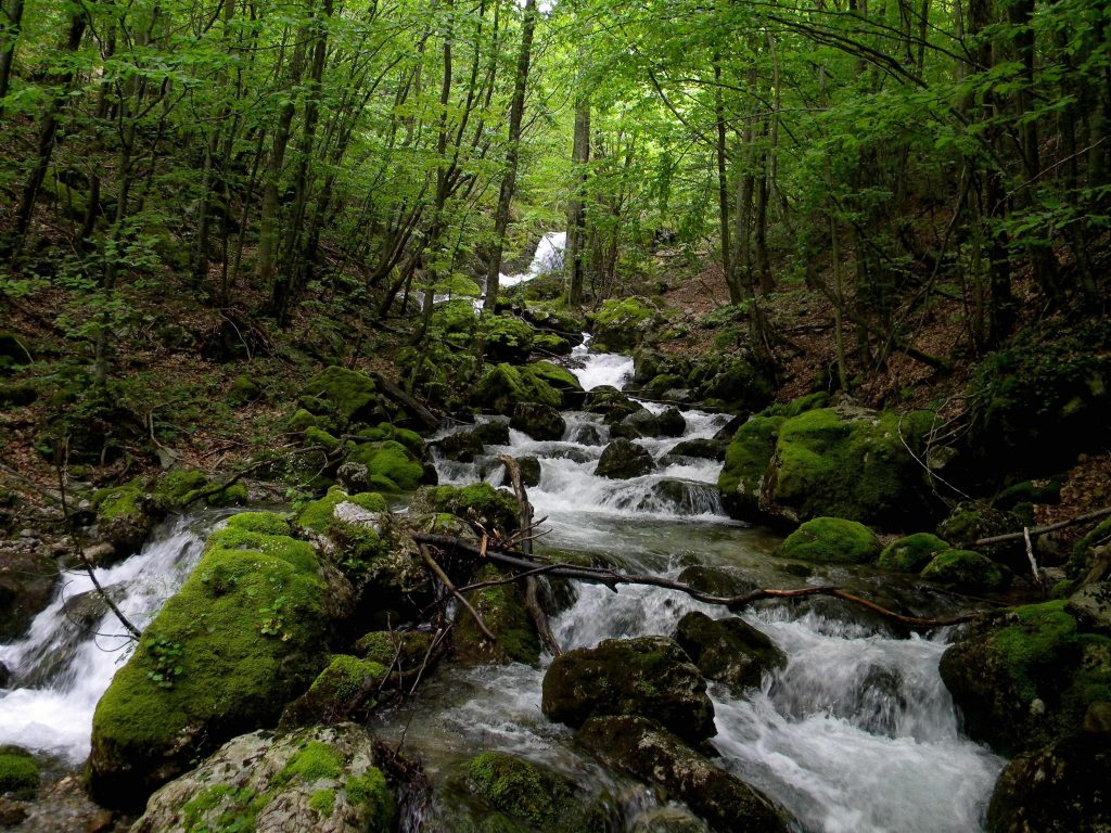 Mountain Stream through Forest
