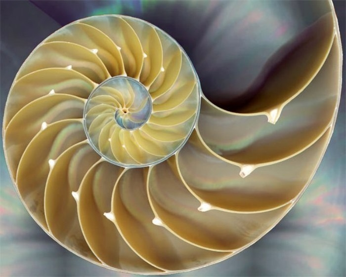 nautilus shell gold