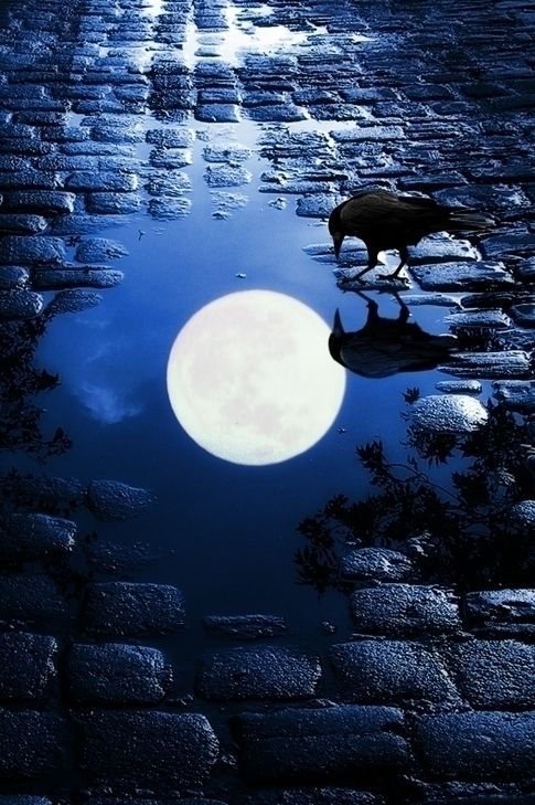 Moon reflected in puddle with raven drinking