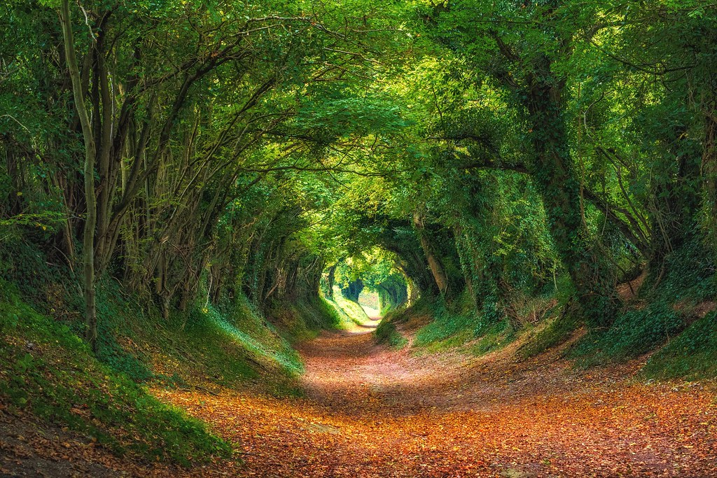 winding path tree tunnel