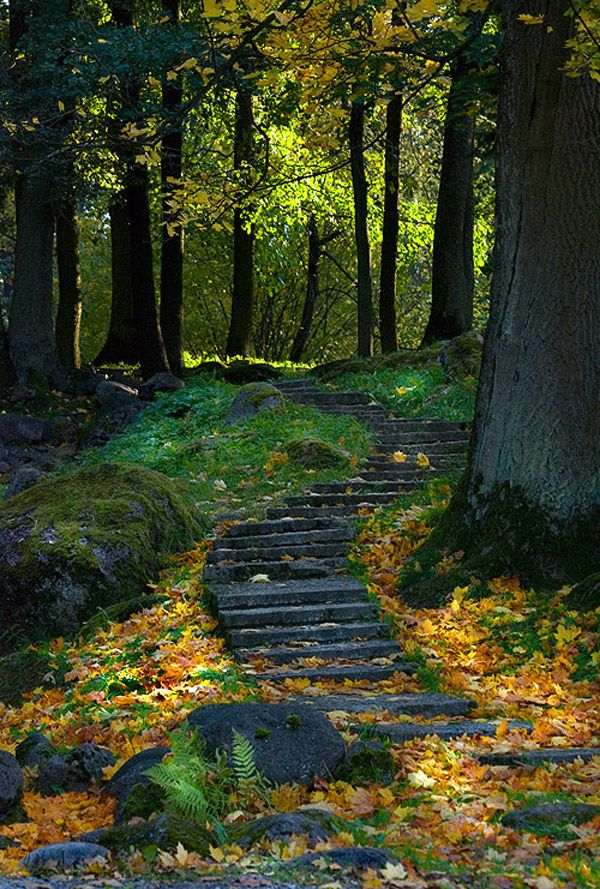 forest path with stone steps and autumn leaves