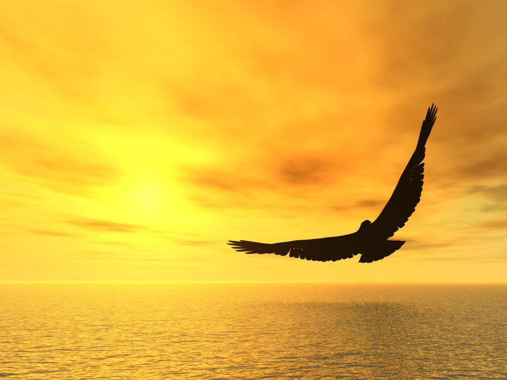 bird soaring above water golden sky