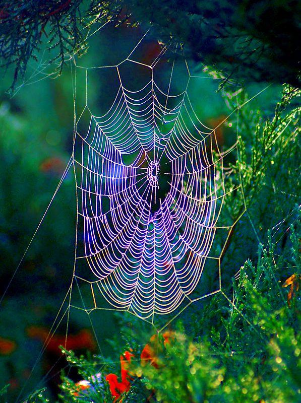 spider web rainbow light