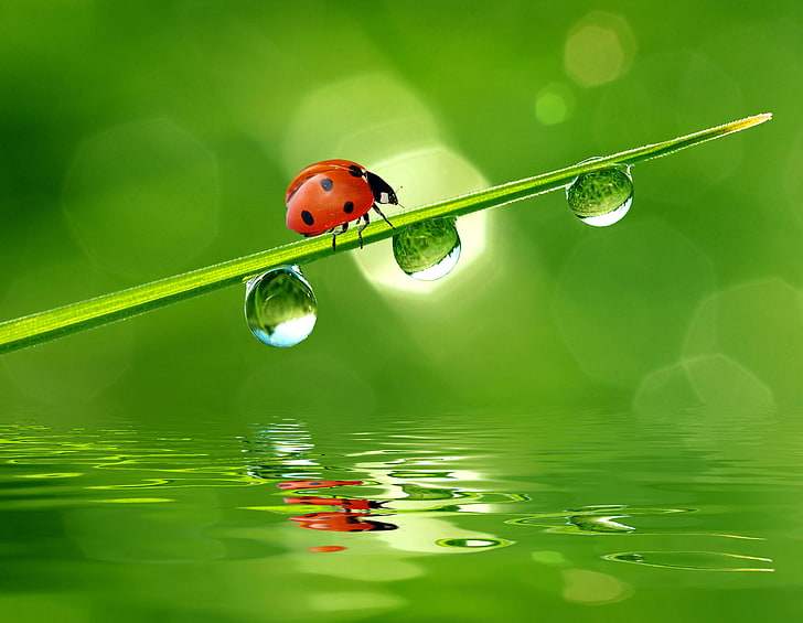 Ladybug grass dew light