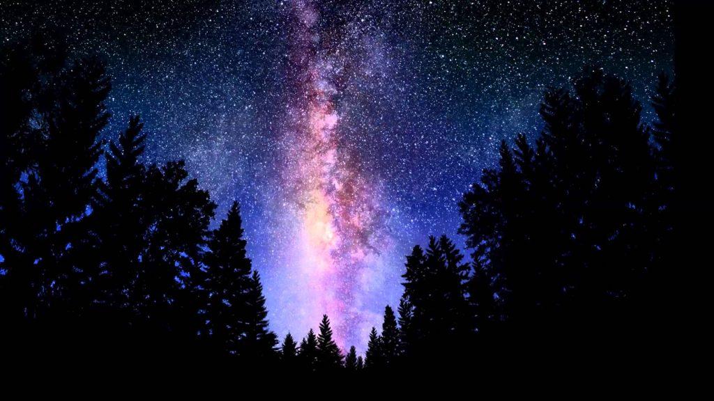 stars above pine trees