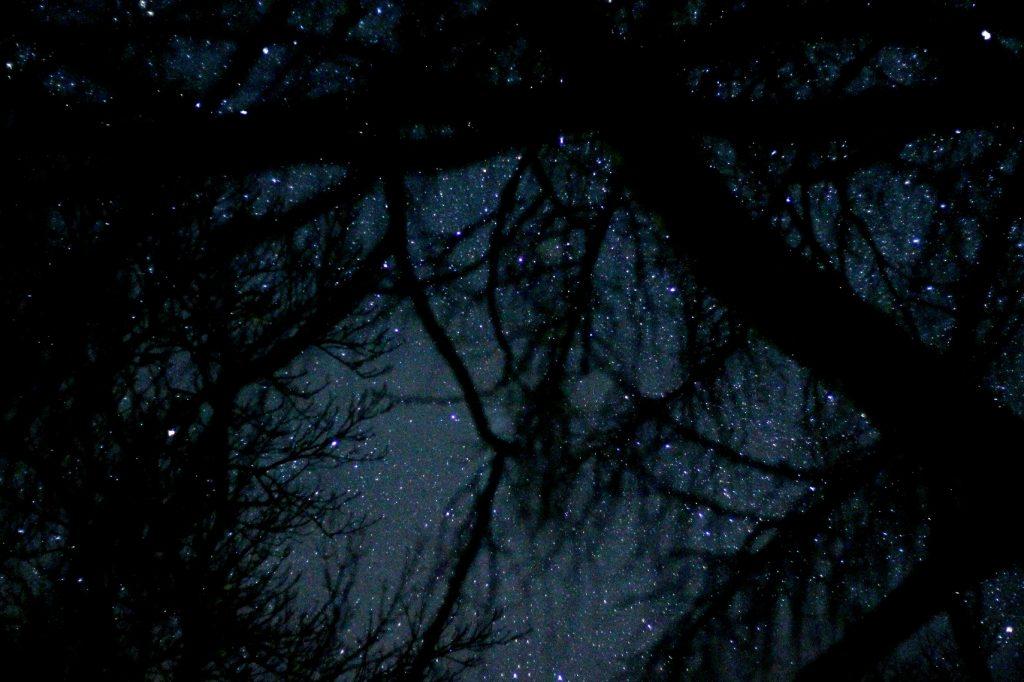 stars through tree branches
