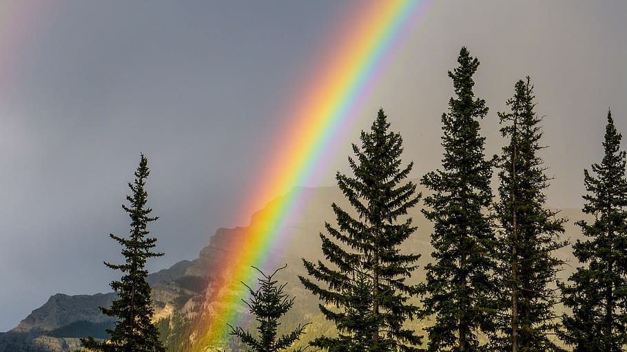 Rainbow with pine trees & mountain