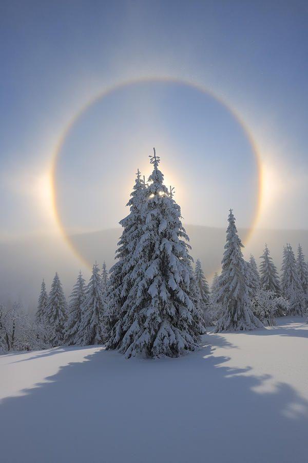 Rainbow over pine tree in snow