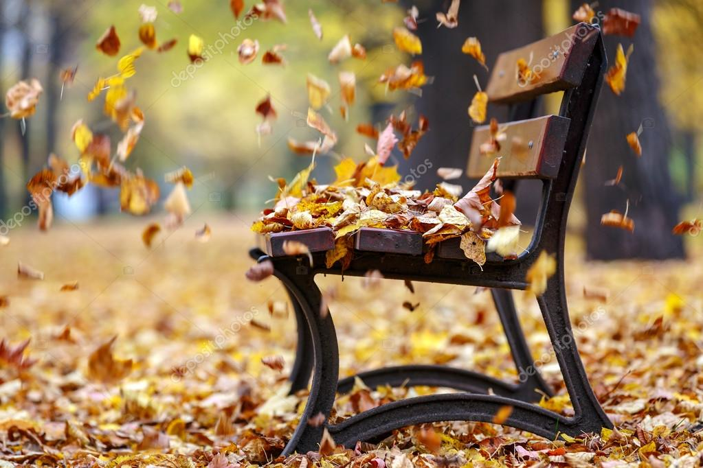 leaves in wind around park bench